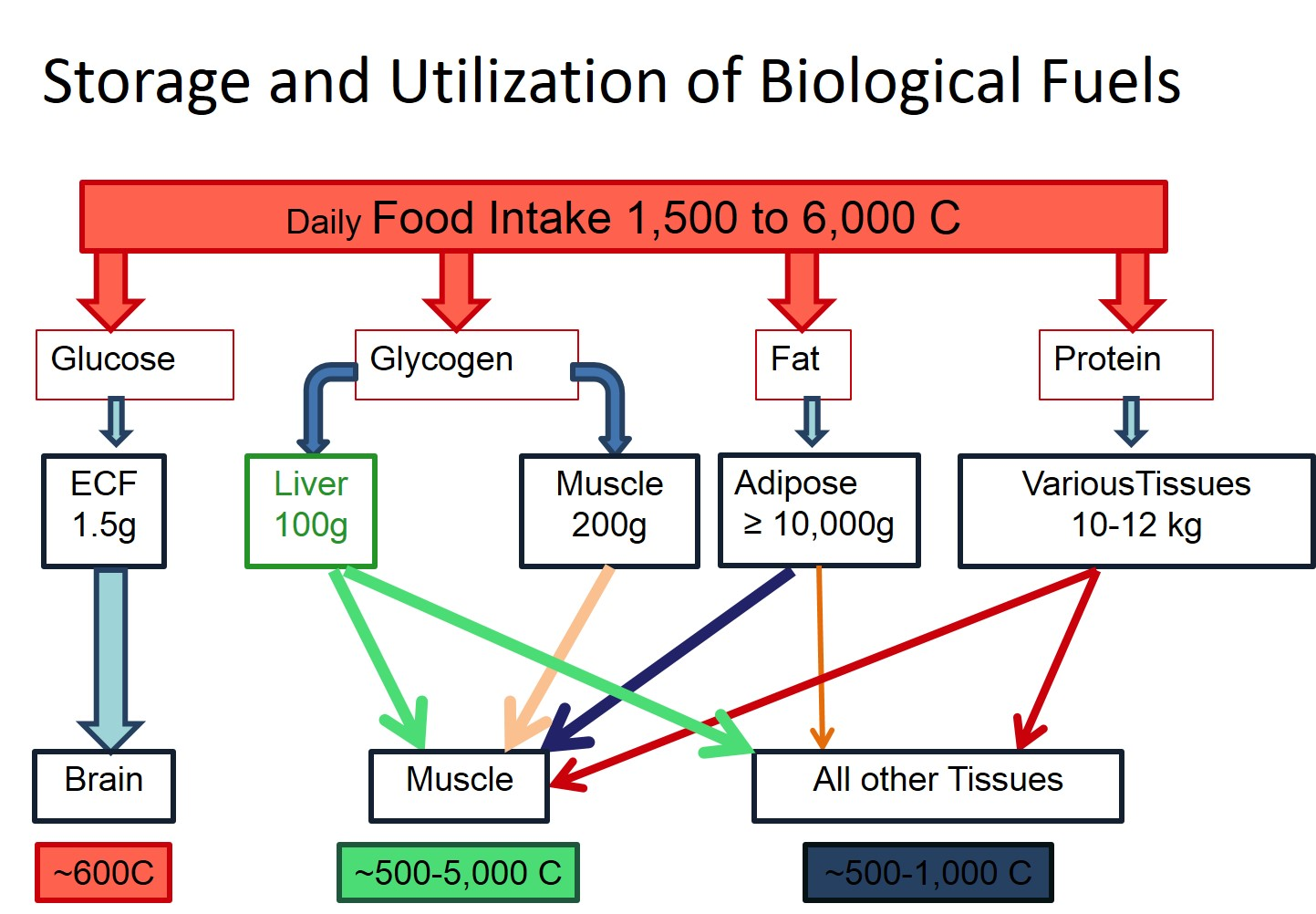 Storage and Utilization of Biological Fuels